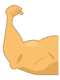 Bras musculaire Image stock