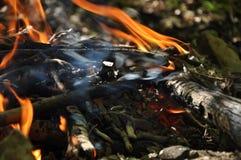 Brasa i skogen Fotografering för Bildbyråer