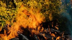 Brasabränning i skogen i höst mot bakgrunden av gula höstsidor tätt upp, brandultrarapid lager videofilmer