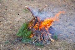 Brasan av sörjer skogen för filialer på våren arkivfoto