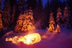 Brasan i vinterskogen exponerar snön Royaltyfri Foto