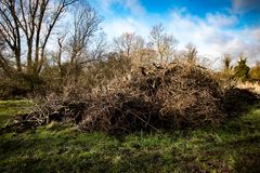 Brash pile in winter sun Royalty Free Stock Images