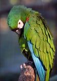 BRASIL Iguacu Fotos de Stock Royalty Free