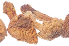 Brasil Morel Mushrooms Isolated Stock Images