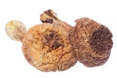 Brasil Morel Mushrooms Isolated. Isolated image of Brasil Morel Mushrooms Royalty Free Stock Photography