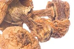 Brasil Morel Mushrooms Isolated