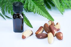 Brasil nuts. Bottle of oil and green leaves  on white background Royalty Free Stock Images