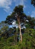 Brasilian джунгли Стоковое фото RF