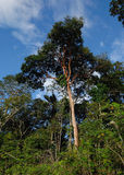Brasilian jungle Royalty Free Stock Photo