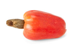 Brasilianer Caju-Acajoubaum-Frucht Lizenzfreie Stockfotografie