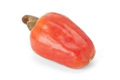 Brasilianer Caju-Acajoubaum-Frucht Lizenzfreie Stockbilder
