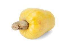 Brasilianer Caju-Acajoubaum-Frucht Stockfotos