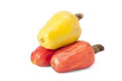 Brasilianer Caju-Acajoubaum-Frucht Stockbilder