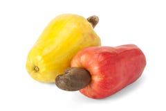 Brasilianer Caju-Acajoubaum-Frucht Lizenzfreie Stockfotos