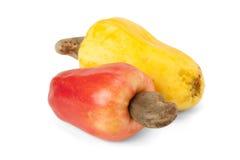 Brasilianer Caju-Acajoubaum-Frucht Stockbild