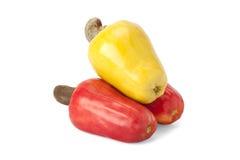 Brasilianer Caju-Acajoubaum-Frucht Lizenzfreies Stockfoto