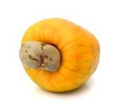 Brasilianer Caju-Acajoubaum-Frucht Lizenzfreies Stockbild