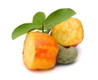 Brasilianer Caju-Acajoubaum-Frucht Stockfoto
