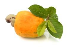 Brasilianer Caju-Acajoubaum-Frucht Stockfotografie