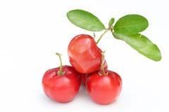 Brasilianische Acerola-Frucht Stockfotografie