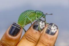 Brasilianische Insekten draußen lizenzfreie stockfotografie