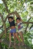 Brasilianische Kinder, die im tropischen Baum klettern lizenzfreie stockbilder