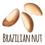 Brasilianische Nussikone, realistische Art vektor abbildung