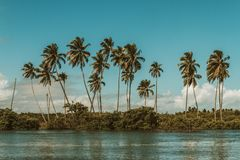 Brasilianische Schwingungen lizenzfreie stockfotografie