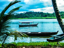 Brasilianischer Dschungel Stockfoto