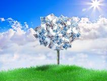 Brasilianischer Geld-Baum Stockfoto