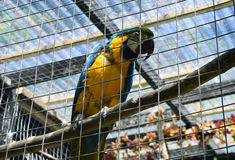 Brasilianischer Papagei Stockfotografie