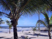 Brasilianischer Strand am Sommer und am sonnigen Tag Stockbild