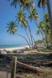 Brasilianischer Strand-Strand von Carneiros, Pernambuco Lizenzfreie Stockfotografie