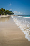 Brasilianischer Strand-Strand von Carneiros, Pernambuco Stockfotografie
