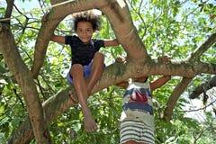 Brasilianska barn som klättrar i tropiskt träd Royaltyfri Foto