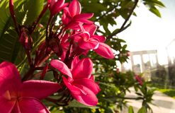 brasilianska blommor royaltyfri foto