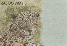 Brasilianska pengar/femtio reais Fotografering för Bildbyråer