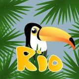 Brasilianska Toucan Royaltyfri Fotografi