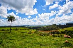 Brasilianskt tropiskt landskap Royaltyfria Bilder