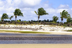Brasilien, Pititinga, Strand mit Palmen Stockfotografie