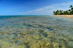 Brasilien strand Royaltyfri Fotografi