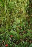 Brasilien vegetation Fotografering för Bildbyråer