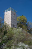 Brasov - tower on blossom hill Stock Image
