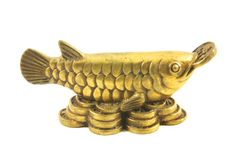 Brass Arowana Royalty Free Stock Photo