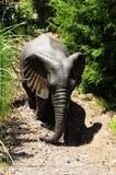 Brass Elephant Royalty Free Stock Image