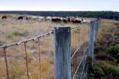 Brass Frame Fence Stock Image