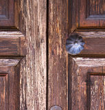 brass  knocker and wood  glass door caronno varesino varese Royalty Free Stock Photo