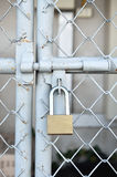 Brass padlock and metal door Stock Photo