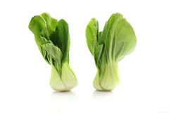 Brassica. In white background in close up stock photo