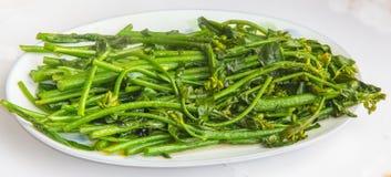 Brassica capitata Stock Image
